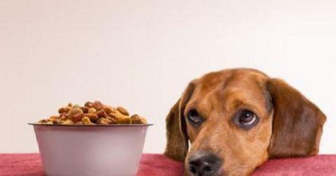 9 thực phẩm tuyệt đối không nên cho chó của bạn ăn