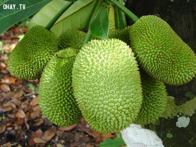 3. Trái cây có gai nhọn,mâm ngũ quả,tết nguyên đán,kiêng kỵ,tâm linh