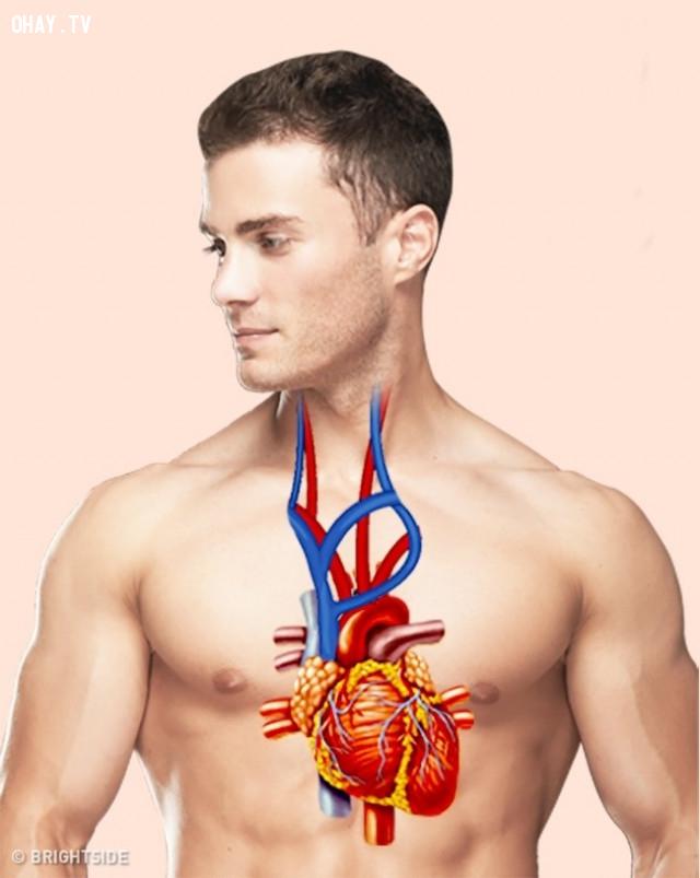 Đau tim,kỹ năng sinh tồn