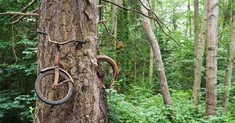 Những cái cây với sức sống mãnh liệt bất chấp thời gian