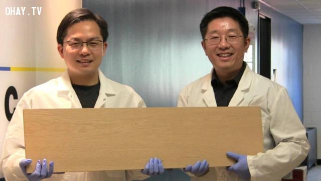,gỗ nhân tạo,phát minh khoa học