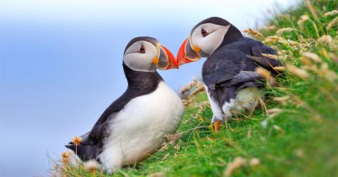 TOP 18 cặp đôi chung thủy nhất trong thế giới động vật - Đến chết mới xa rời