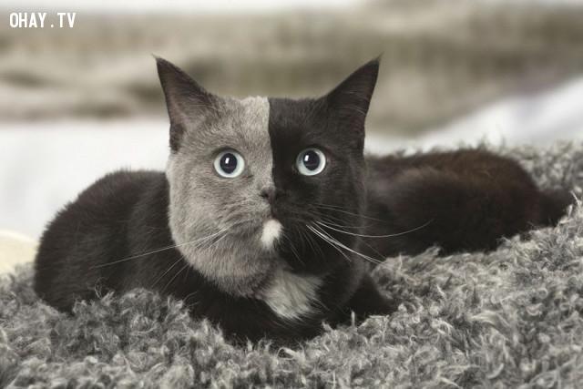 ,loài mèo