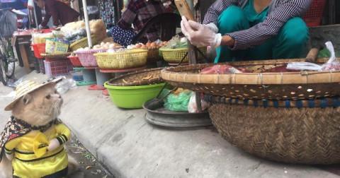 Gặp chú mèo Việt Nam nổi như cồn trên cộng đồng yêu mèo thế giới
