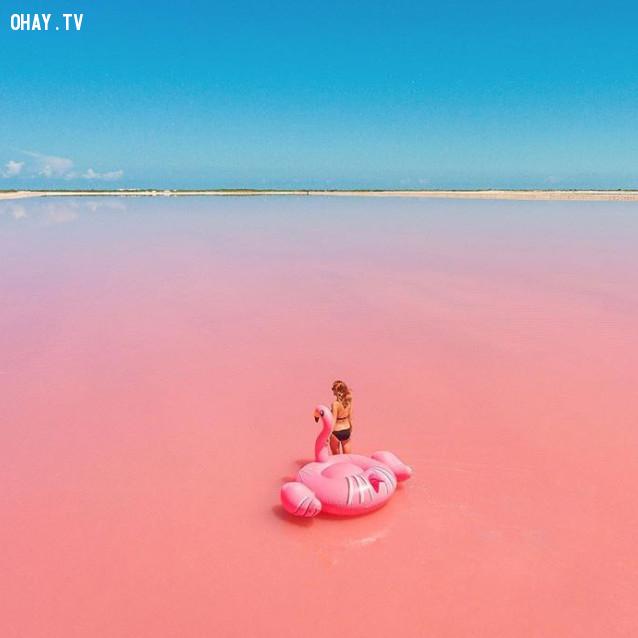 Las Coloradas, Mexico,màu hồng,địa điểm sống ảo