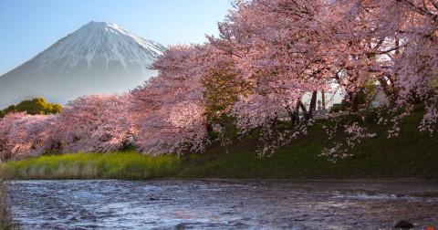 20 bức ảnh tuyệt đẹp về Nhật Bản - xứ sở hoa Anh Đào vào mùa xuân