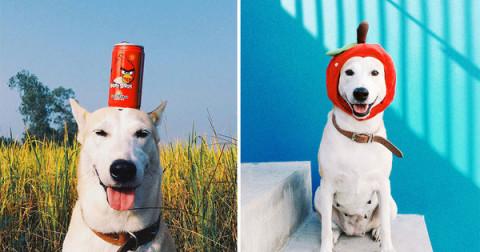 'Chó' và những sự thật thú vị