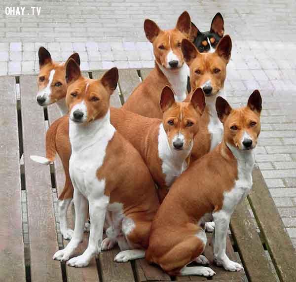 ,loài chó,thú cưng,Những điều thú vị trong cuộc sống