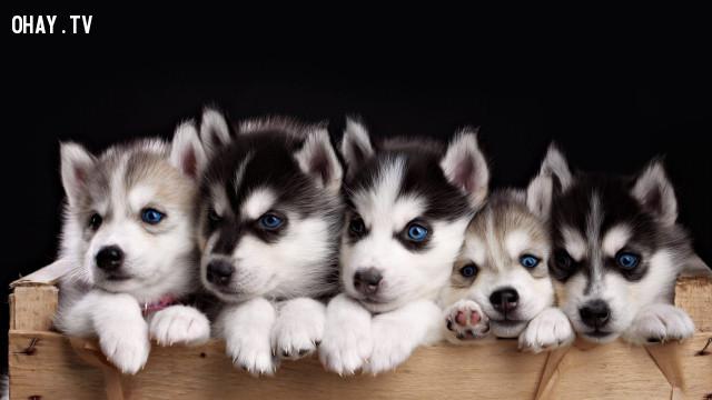 6. Loài mắt kém,loài chó,thú cưng,Những điều thú vị trong cuộc sống