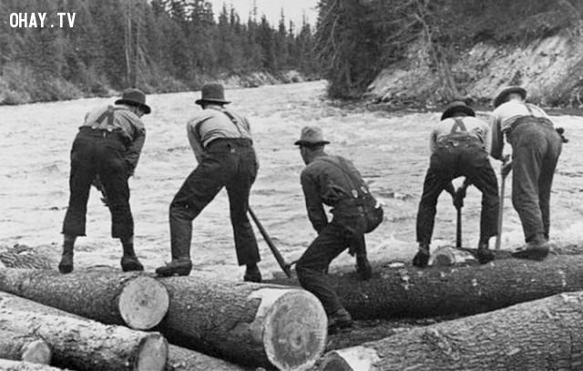 9. Thợ lái gỗ,công việc,việc làm,người xưa,Những điều thú vị trong cuộc sống