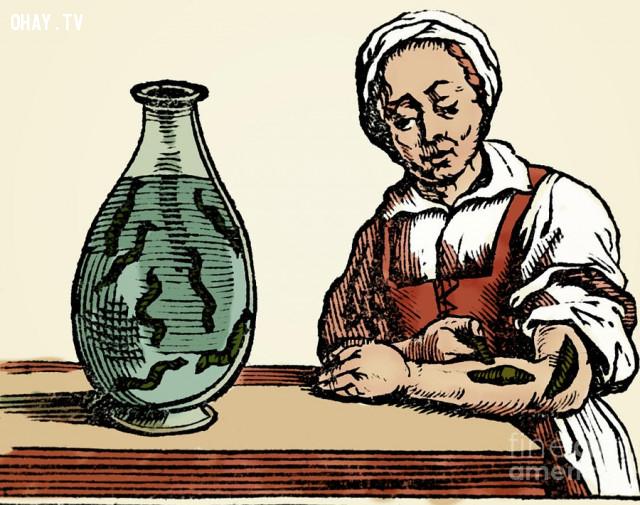 6. Nghề nuôi đỉa,công việc,việc làm,người xưa,Những điều thú vị trong cuộc sống