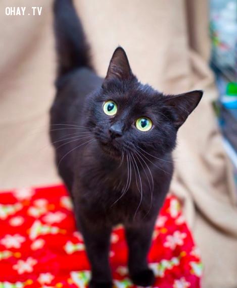 Không cho mèo đen vào nhà,thứ 6 ngày 13,ngày xui xẻo,tâm linh