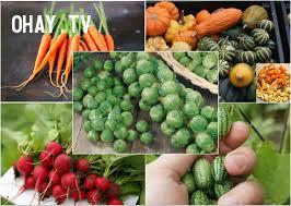 Tăng cường ăn hoa quả và các loại hạt,