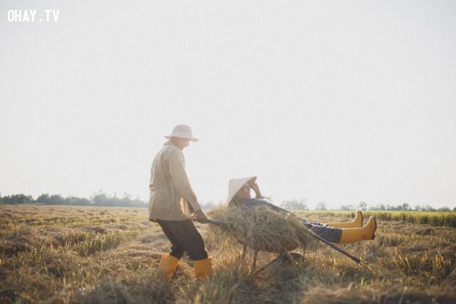 ,nhiếp ảnh,mùa gặt