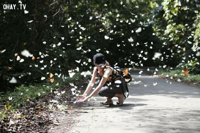 Mùa bướm ở Cúc Phương,rừng Cúc Phương,vườn quốc gia Cúc Phương