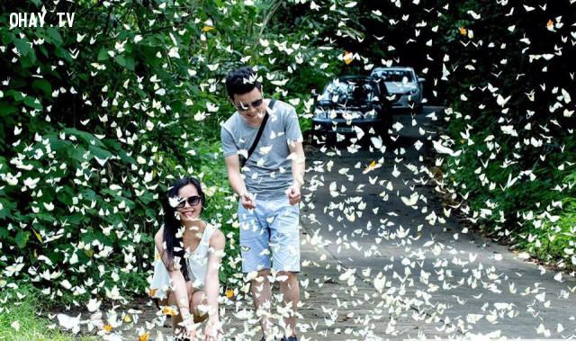 Địa điểm du lịch lí tưởng cho các cặp đôi,rừng Cúc Phương,vườn quốc gia Cúc Phương