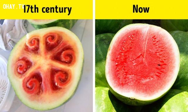 Dưa hấu 500 năm trước đây khác xa với dưa hấu hiện tại,Những điều thú vị trong cuộc sống