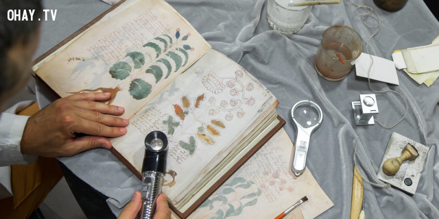 ,sách cổ,bản thảo voynich