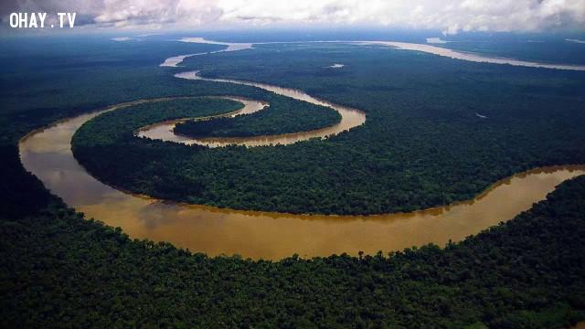 ,1001 câu hỏi vì sao,sông Amazon