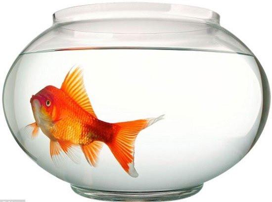 1. Não cá vàng, suy giảm trí nhớ,thức khuya,sống khỏe