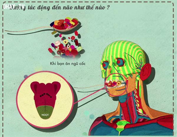 ,chế độ ăn uống,não bộ