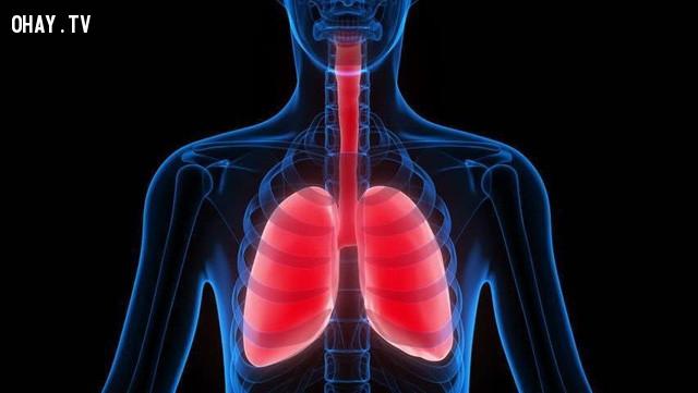 Tăng thể tích phổi,đi bộ mỗi ngày