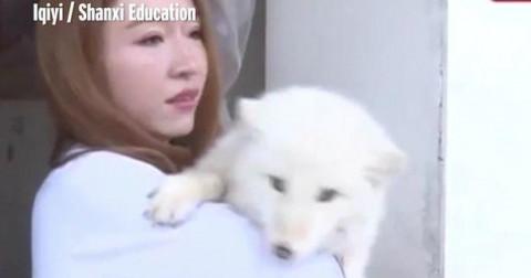 Mua chó Nhật về nuôi gần 1 năm mới phát hiện là con khác