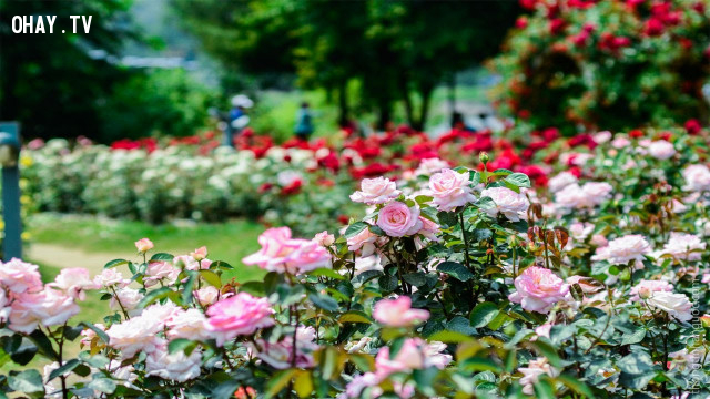 Nhìn thấy một vườn hoa trên đường đi, bạn sẽ hái loài hoa nào để đem về nhà?