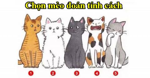 Chọn chú mèo mà bạn thích sẽ tiết lộ những điều người khác nghĩa về bạn
