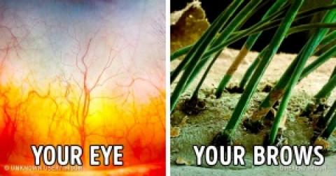 Hình dạng vạn vật dưới kính hiển vi sẽ khiến bạn ngạc nhiên khi xem!
