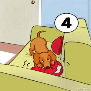 4. Ngăn con chó cắn cái gối trước