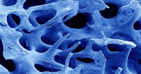16 bức ảnh sống động về bộ phận cơ thể người qua kính hiển vi