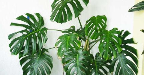 Tìm hiểu tên các loại cây cảnh trong nhà
