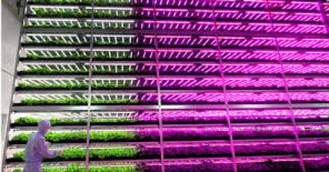Nông nghiệp 4.0 - Kích thích sự sinh trưởng của cây trồng bằng việc điều khiển các bước sóng ánh sáng