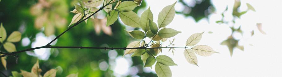 leaf2545