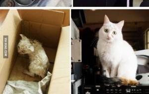 15 Chú Mèo Trước Và Sau Khi Được Nhận Nuôi