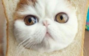 25 điều thú vị về loài mèo