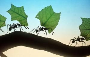5 điều bạn có thể học từ loài kiến
