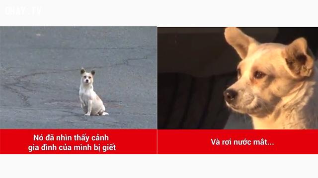 Cảm động chú chó luôn nhìn về một hướng và rơi nước mắt