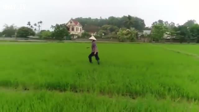 Người phụ nữ thăm đồng chạy mất dép vì thấy flycam